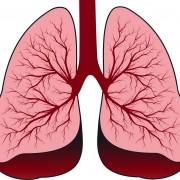 Illustrasjon av lunger