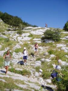 Bilder av mange som trener med staver på vei ned en fjellskråning