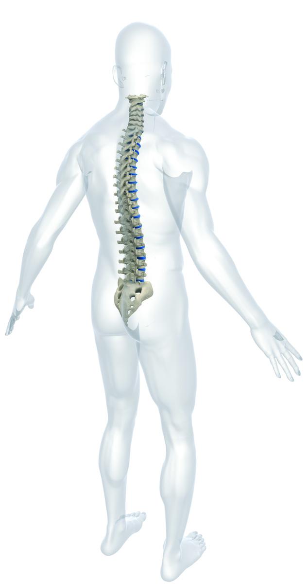 Tegning av mann med uthevet ryggrad