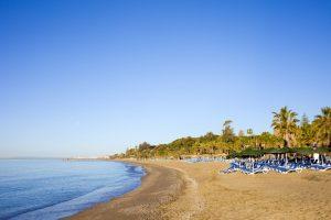 Strand med blått hav og palmer