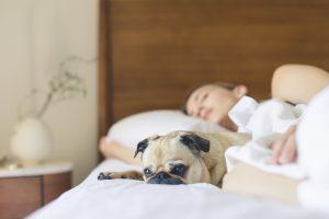 Kvinne som sover i sengen med en liten hund som passer på