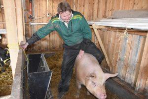 Mann rir på en gris i en bås