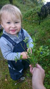 Hånd rekker fram blåbærris til liten gutt