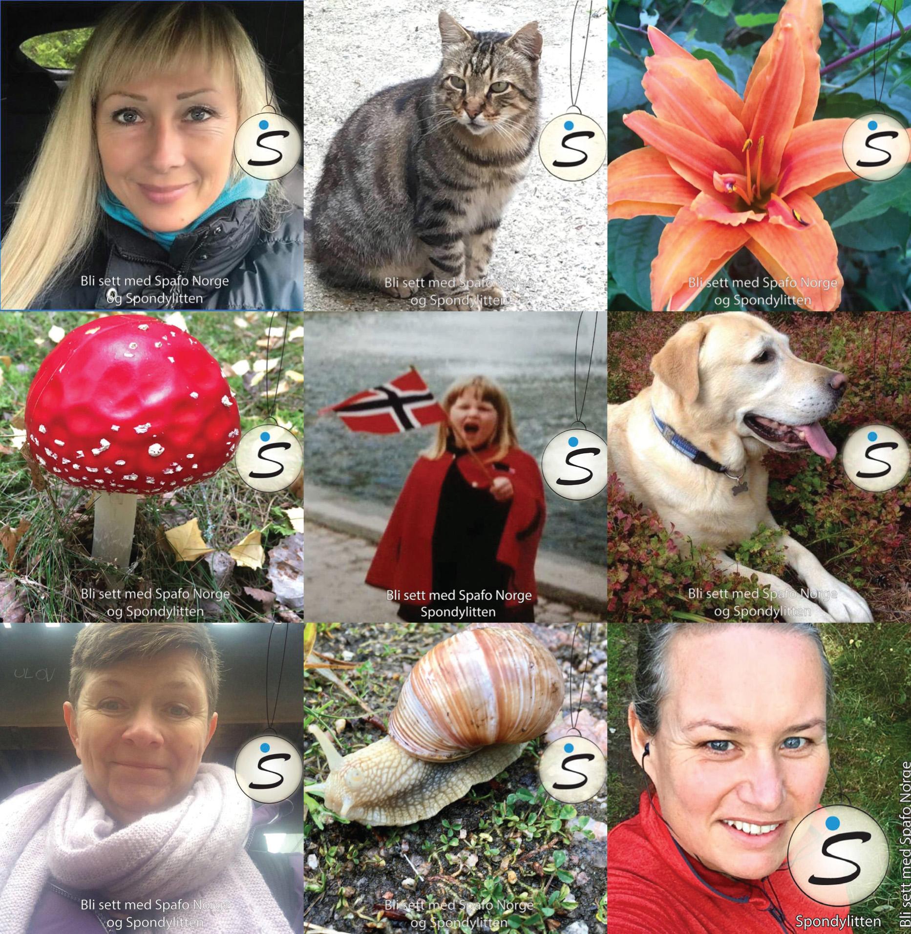 Collage av profilbilder med refleksramme
