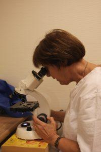 Lege kikker i et mikroskop