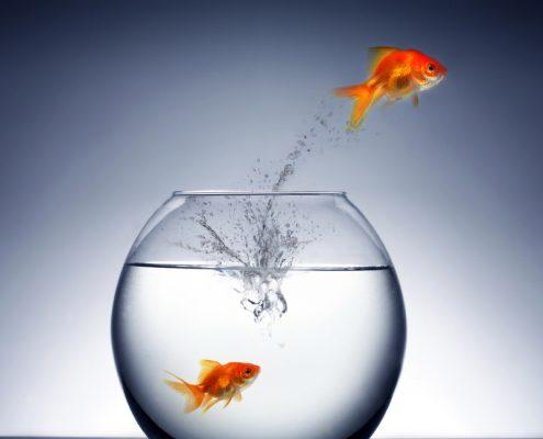 En gullfisk hopper ut av bollen mens den andre er igjen