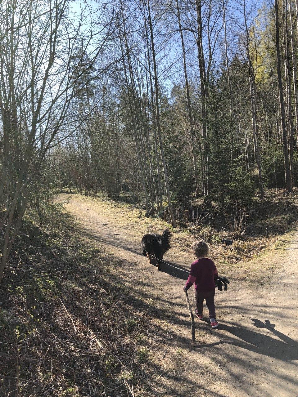 Lite barn med stokk går tur med stor hund i bånd