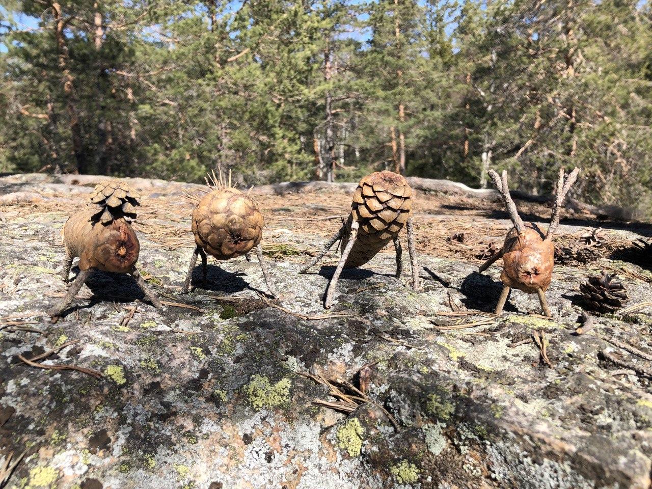 Diverse kongledyr på en stein i skogen