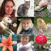 Collage med profilbilder med Spafo-refleks som ramme